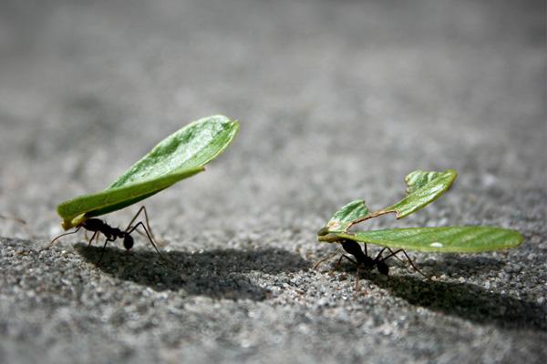 Die Ameisen sind das KeyVisual von Alpha Com